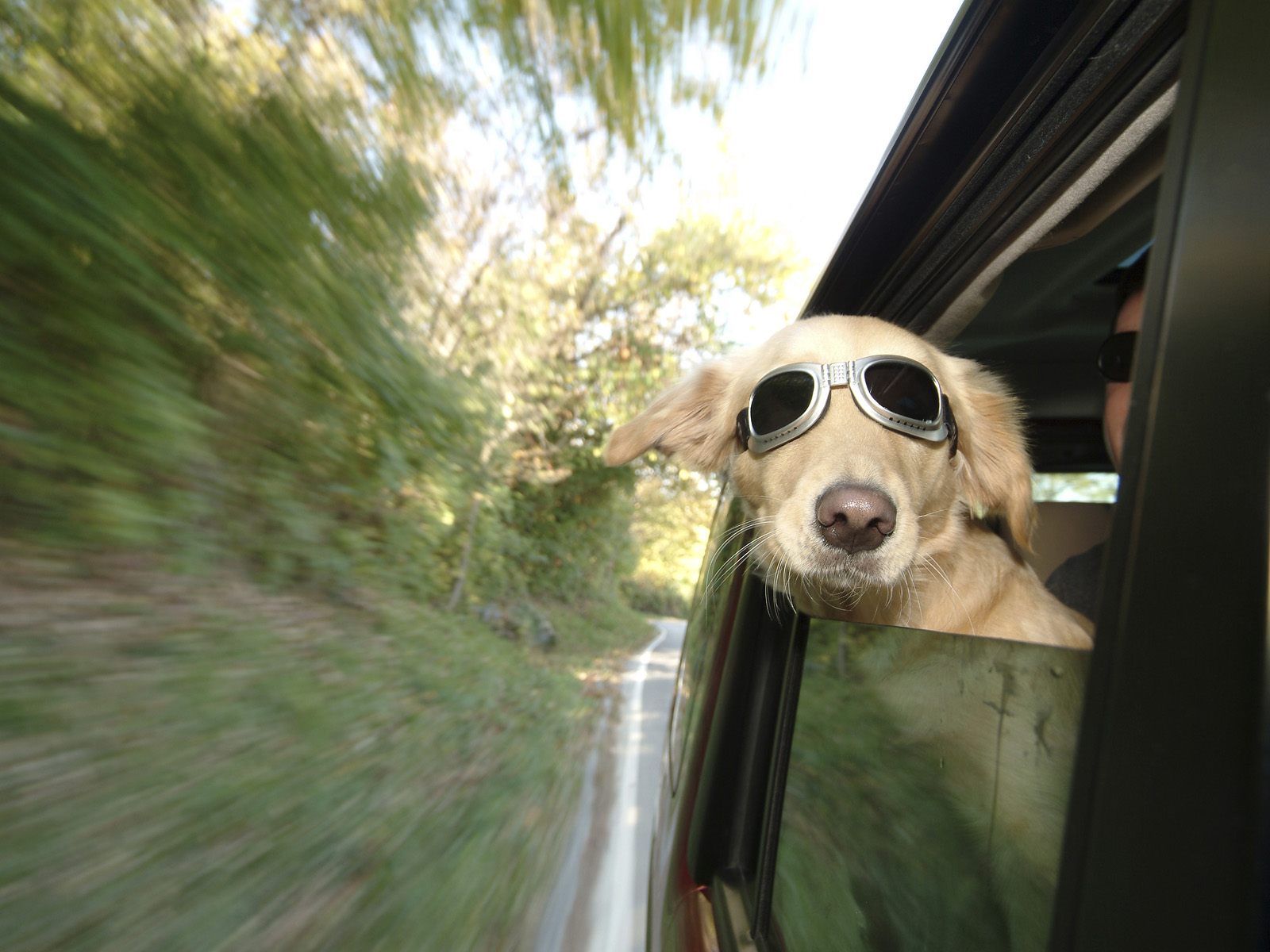 6-smart-tips-for-driving-with-your-pet