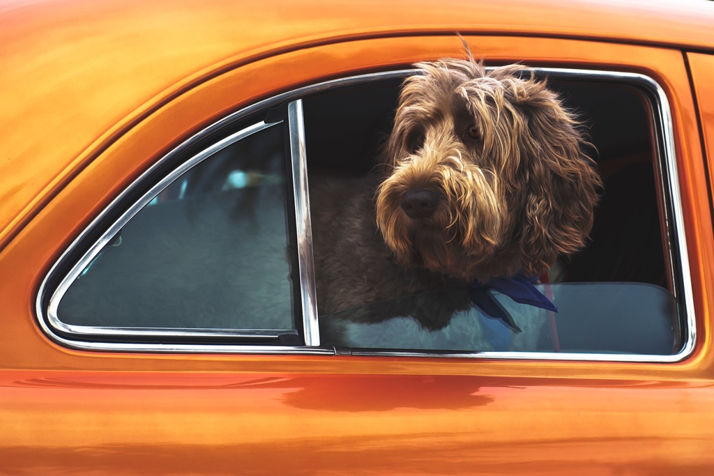 Driving-with-your-pet